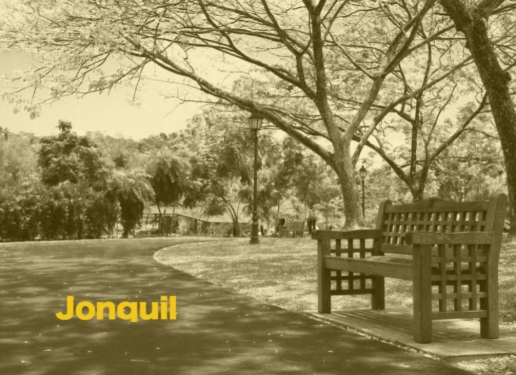 Jonquil
